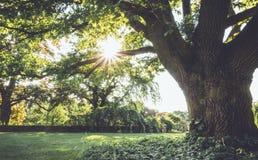 Zonnestraalstralen door reusachtige oude boom in de recente lente bij Ringwood-het Park van de Staat, NJ in het uitstekende plaat Stock Foto