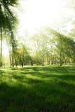 Zonnestralen in bos Royalty-vrije Stock Afbeelding