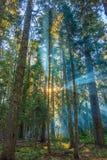 Zonnestralen die door de ochtendmist glanzen Royalty-vrije Stock Afbeelding
