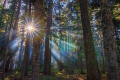 Zonnestralen die door de ochtendmist glanzen Stock Foto