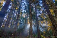 Zonnestralen die door de ochtendmist glanzen Stock Foto's
