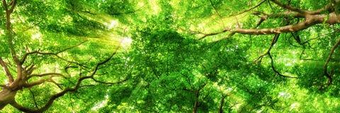 Zonnestralen die door hoge treetops glanzen Royalty-vrije Stock Afbeeldingen
