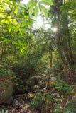 Zonnestralen die door regenwoud glanzen leafes stock afbeeldingen