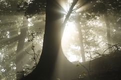 Zonnestralen door bomen stock afbeeldingen