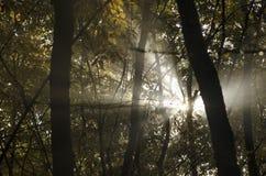 Zonnestralen door bomen stock foto