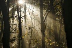 Zonnestralen door bomen stock afbeelding