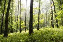 Zonnestralen door bomen royalty-vrije stock afbeelding