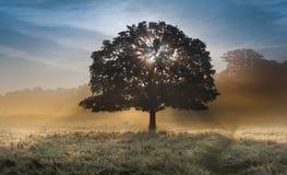 Zonnestralen door boom op mistig landschap Stock Afbeeldingen
