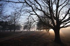 Zonnestralen door boomtakken #2 Stock Foto