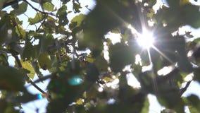 Zonnestralen door de Bomen stock videobeelden
