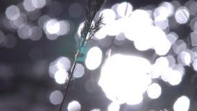 Zonnestralen door de Bomen stock video
