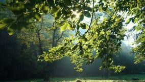 Zonnestralen door de bosbomentakken stock video