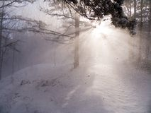 Zonnestralen door sneeuwvlaag Stock Foto's