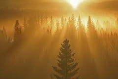 Zonnestralen en bos Royalty-vrije Stock Afbeeldingen