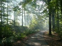 Zonnestralen in het bos stock fotografie