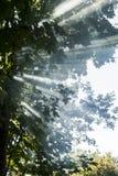 Zonnestralen in het bos Stock Afbeeldingen