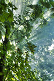Zonnestralen in het bos Stock Foto's