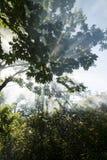 Zonnestralen in het bos Royalty-vrije Stock Foto