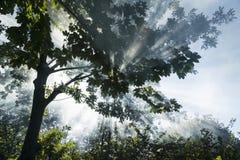 Zonnestralen in het bos Royalty-vrije Stock Afbeeldingen