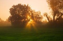 Zonnestralen in het de lentehout Stock Fotografie