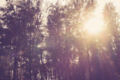 Zonnestralen in het hout Royalty-vrije Stock Fotografie