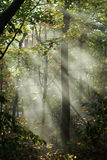 Zonnestralen in hout Royalty-vrije Stock Foto