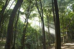 Zonnestralen in hout Zonstralen Stock Afbeeldingen
