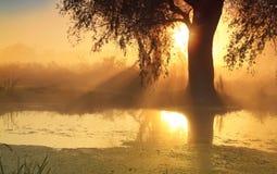 Zonnestralen in nevelige ochtend stock fotografie