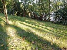 Zonnestralen op het gras stock afbeelding