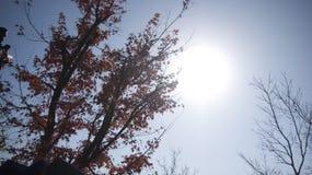 zonnig stock afbeeldingen
