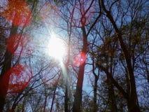 zonnig Stock Fotografie