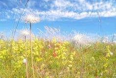 Zonnig beeld van wildflowers Stock Fotografie