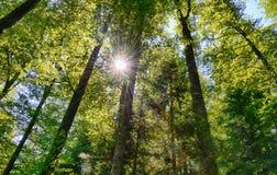 Zonnig bos met zonstralen stock fotografie