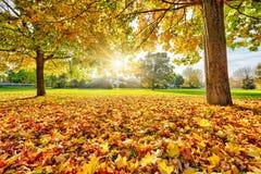 Zonnig de herfstgebladerte Stock Fotografie