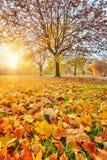 Zonnig de herfstgebladerte Stock Foto's