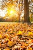 Zonnig de herfstgebladerte Royalty-vrije Stock Afbeelding