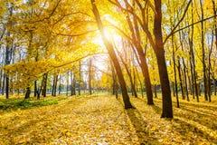 Zonnig de herfstpark Stock Afbeelding
