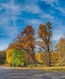 Zonnig de herfstpark Stock Afbeeldingen