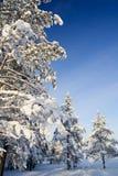Zonnig de winterbos Stock Foto