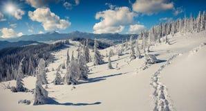 Zonnig de winterpanorama van de Karpatische bergen Stock Afbeeldingen