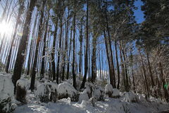 Zonnig de wintersprookjesland Royalty-vrije Stock Fotografie