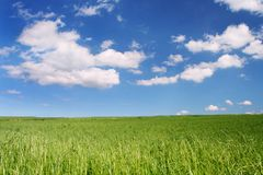 Zonnig gebied onder blauwe hemel stock foto