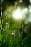 Zonnig gras Stock Afbeeldingen