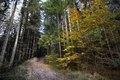 Zonnig herfstbos versus ziek en zuurrijk bos royalty-vrije stock afbeelding