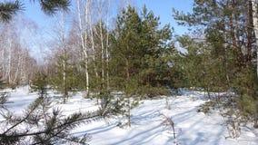 Zonnig in het bos Stock Afbeelding