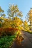 Zonnig landschap in de herfst stock afbeelding