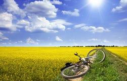 Zonnig landschap met fiets Stock Foto's