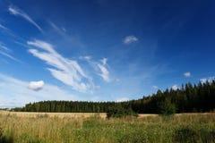 Zonnig landschap van een weide Stock Afbeeldingen