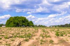 Zonnig landschap van het platteland in het begin van de zomer Talrijk onkruid en onlangs gelegde hobbelige weg over het geploegde stock afbeeldingen