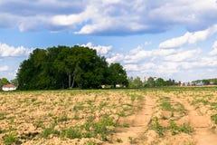 Zonnig landschap van het platteland in het begin van de zomer Talrijk onkruid en onlangs gelegde hobbelige weg over het geploegde royalty-vrije stock foto